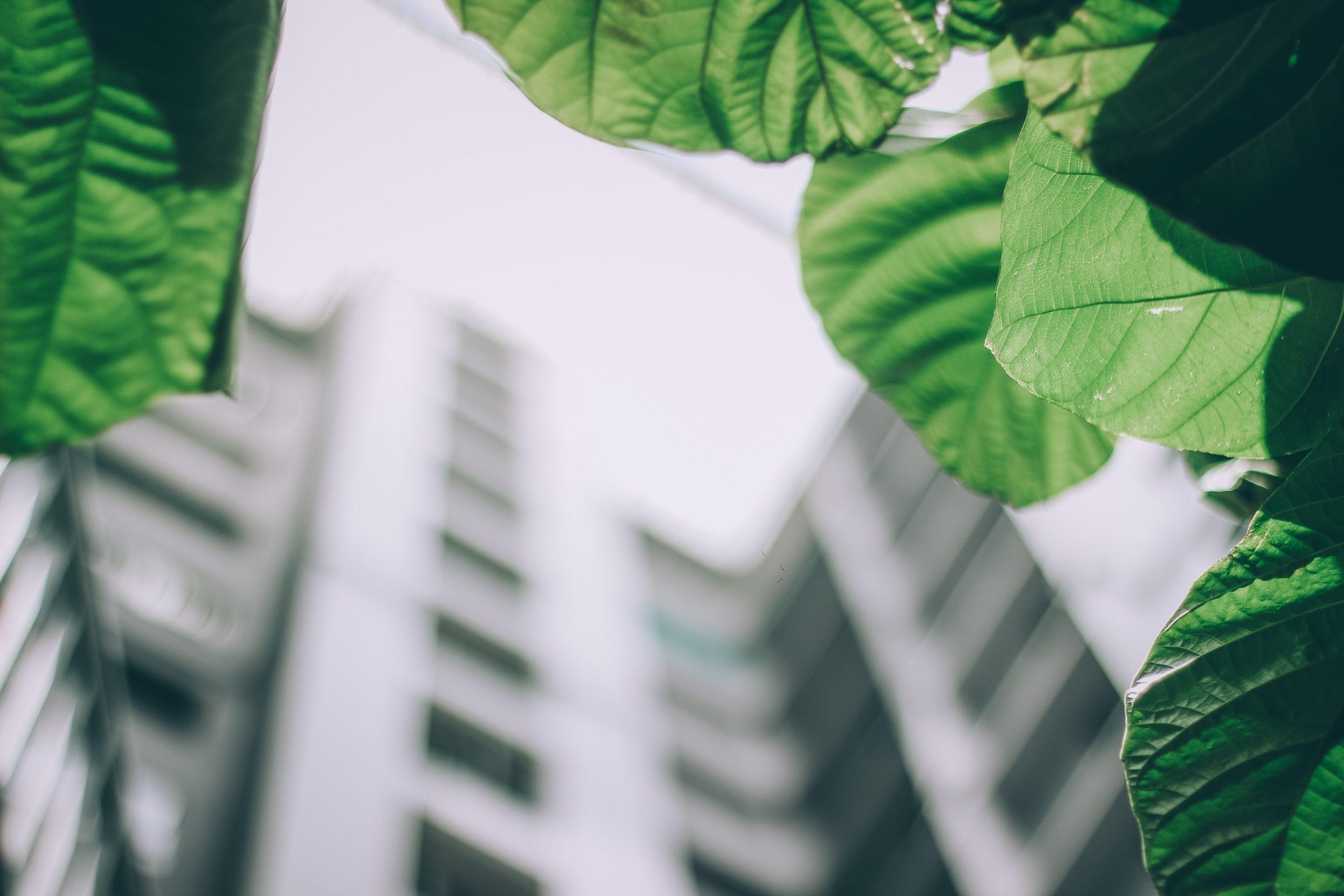 green building commercial landscape architecture