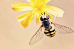 keep bees away from people in landscapes