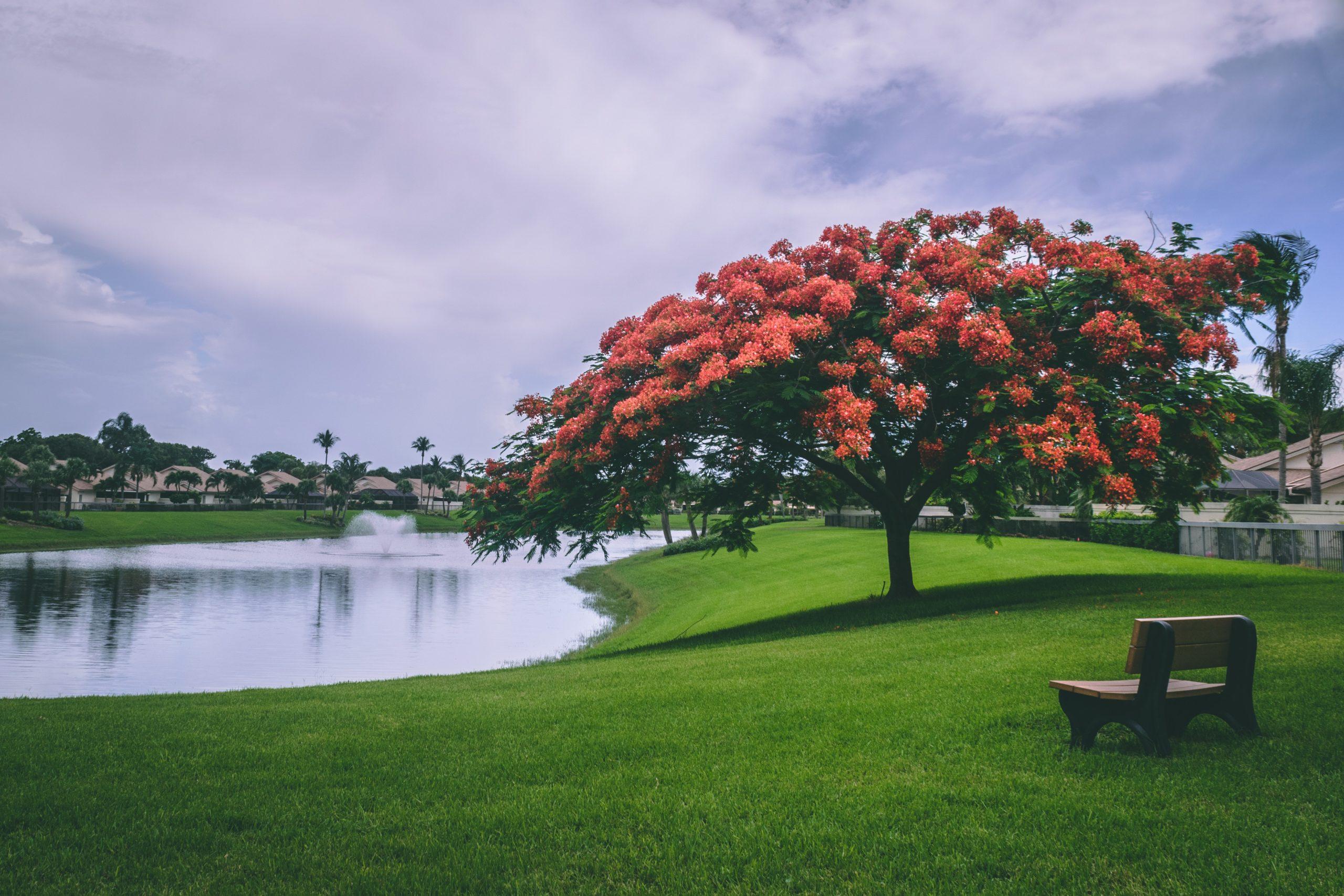 beautiful park green space
