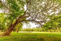green spaces mean trees add oxygen environmental benefits